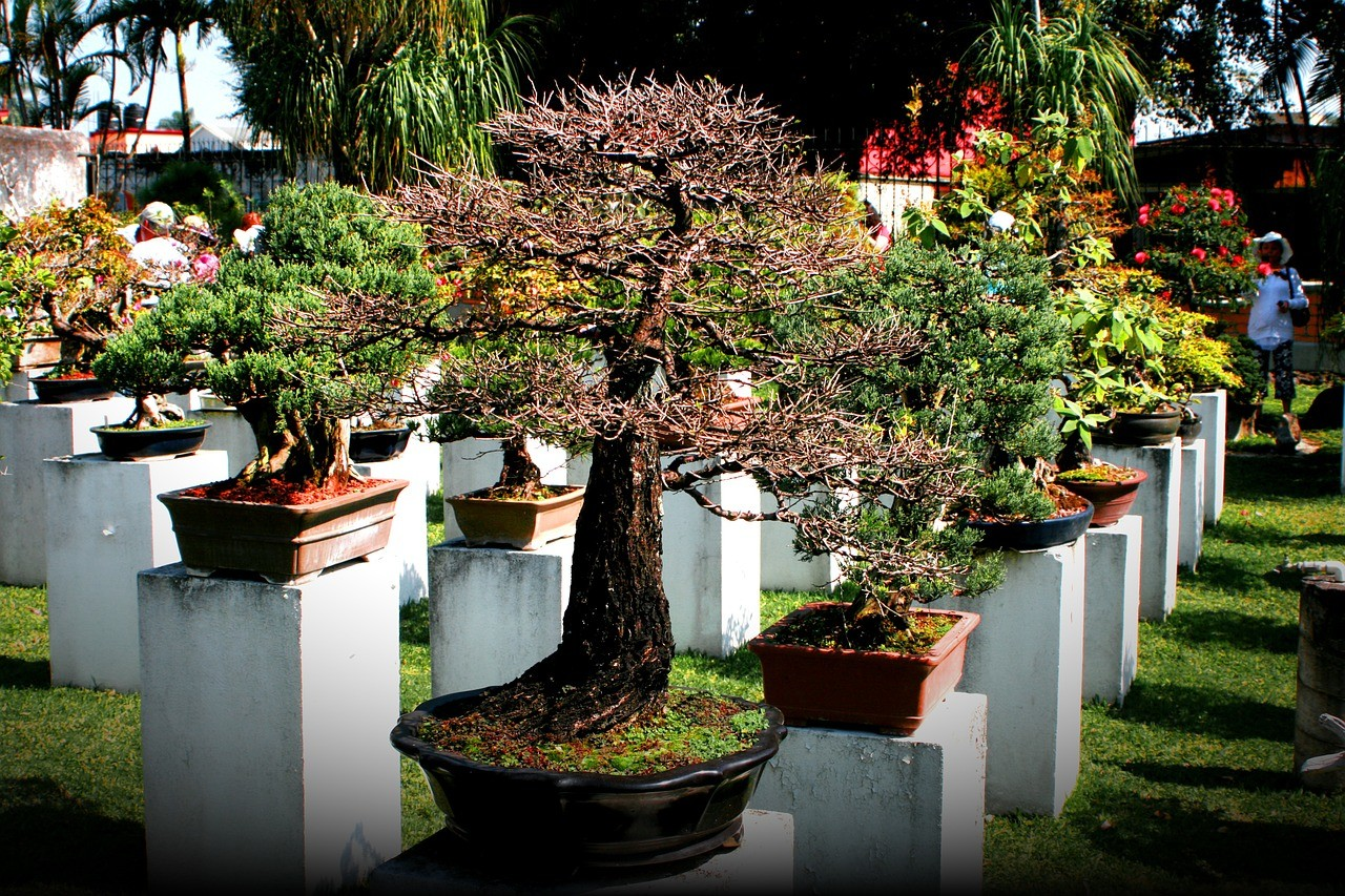 bonsai-670591_1280