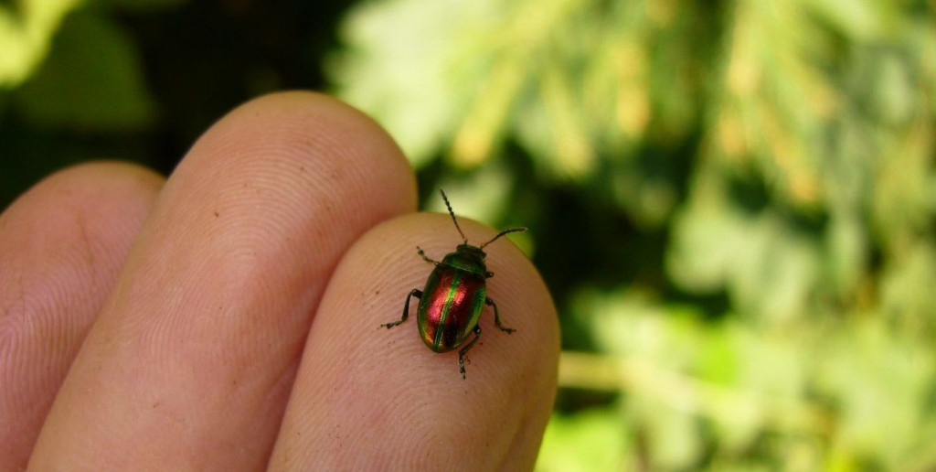 insectstarsnbars