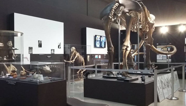 Photo: Facebook Musée d'Anthropologie Préhistorique Monaco