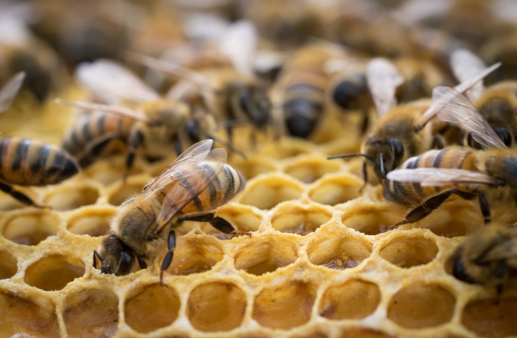 inside-the-bee-hive