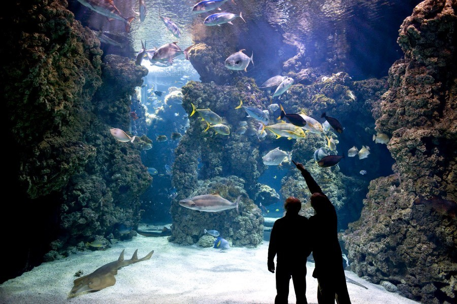 People looking at the aquarium